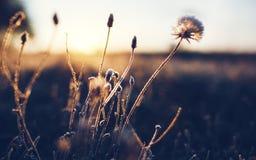 Djupfryst rimfrostväxt för otta i tidig höstmorgon Frostiga växter i trädgården, annalkande vintertid royaltyfria bilder