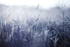 Djupfryst rimfrostväxt för otta i tidig höstmorgon Frostiga växter i trädgården, annalkande vintertid arkivbild