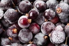 Djupfryst sikt för vinbärbärmakro Fotografering för Bildbyråer