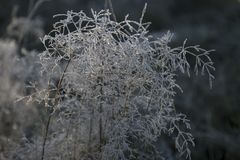 Djupfryst silverväxt Royaltyfri Foto