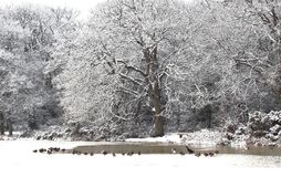 Djupfryst sjö en gemensam sikt i mitt av vintern arkivbilder