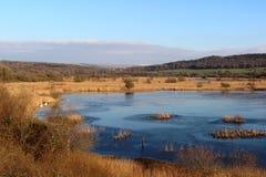 Djupfryst sjö på den Leighton Moss RSPB naturreserven Royaltyfri Fotografi