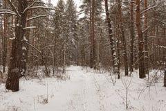 Djupfryst skog Royaltyfri Bild