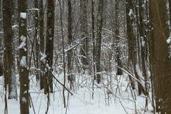 Djupfryst skog Arkivfoton