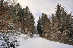 Djupfryst skog arkivbild