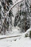 Djupfryst skog Arkivbilder