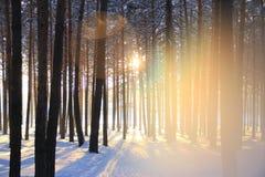 Djupfryst skog Royaltyfri Foto