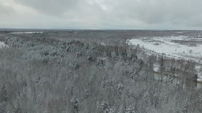 Djupfryst skog lager videofilmer