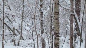 Djupfryst skog stock video