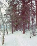 Djupfryst skog Fotografering för Bildbyråer