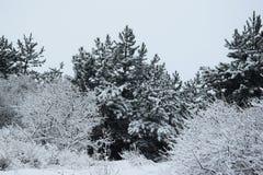 Djupfryst skog arkivfoto