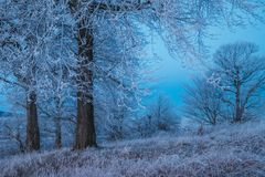 Djupfryst skog i Skottland arkivfoton