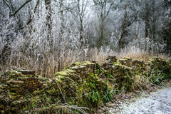 Djupfryst skog med den gröna väggen fotografering för bildbyråer