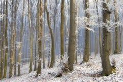 Djupfryst skog med solen som skiner på trädstammar på en vintermorgon Royaltyfri Fotografi