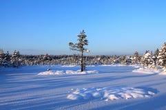 Djupfryst skogsjö Royaltyfri Fotografi