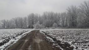 Djupfryst snö på skog Arkivbild