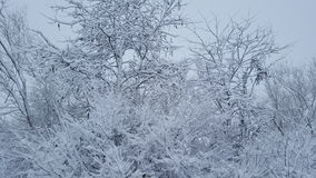 Djupfryst snö på skog Royaltyfria Foton