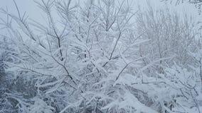 Djupfryst snö på skog Arkivbilder