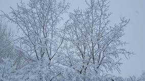 Djupfryst snö på skog Arkivfoto