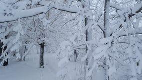 Djupfryst snö på skog Royaltyfri Fotografi