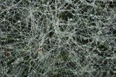 djupfryst spiderweb Arkivfoton