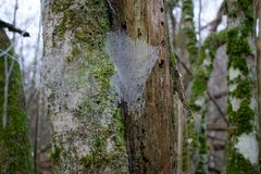 Djupfryst spiderweb i skog under vinters?song royaltyfria bilder