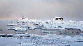 djupfryst stenar Arkivfoto