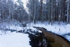 Djupfryst ström i vinterskog Royaltyfri Fotografi