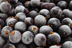 Djupfryst svart vinbärbakgrund Royaltyfri Foto