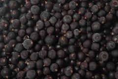 Djupfryst svart vinbärbakgrund Royaltyfri Fotografi