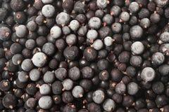 Djupfryst svart vinbärbakgrund arkivbilder