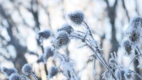Djupfryst tagg i landskapet för natur för skog för vinter för snö för torrt gräs för snövinter Arkivbilder