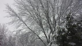 Djupfryst tid på träden arkivfoto