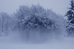 Djupfryst träd Royaltyfri Fotografi