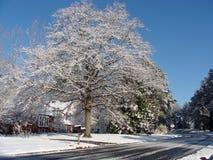 Djupfryst träd Royaltyfria Foton