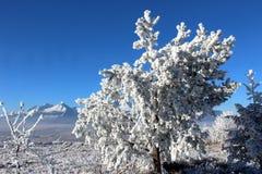 Djupfryst träd 03 Arkivfoton