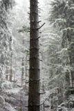 Djupfryst träd i en djupfryst skog Arkivfoto