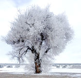 Djupfryst träd med snö på jordningen Fotografering för Bildbyråer