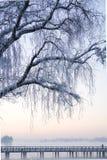 Djupfryst träd och bro på en alpin sjö Arkivfoto