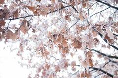 Djupfryst trädblad Royaltyfria Foton