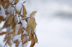 Djupfryst trädfilial i vinter arkivfoton