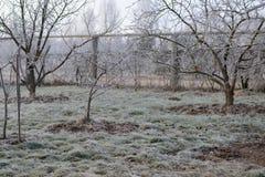 Djupfryst trädgårds- landskap med frostiga träd och frostigt gräs Royaltyfria Bilder