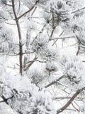 djupfryst tree Royaltyfri Bild