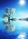djupfryst tree Royaltyfri Fotografi