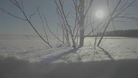 Djupfryst tree på vinterfält och den blåa skyen vinter för designbildtree Ensamt fryst träd i snöig fält lager videofilmer