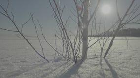 Djupfryst tree på vinterfält och den blåa skyen vinter för designbildtree Ensamt fryst träd i snöig fält stock video