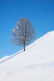 djupfryst trees Royaltyfria Bilder