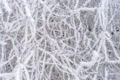 djupfryst trees Royaltyfri Fotografi