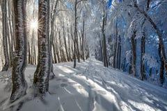 djupfryst trees Fotografering för Bildbyråer