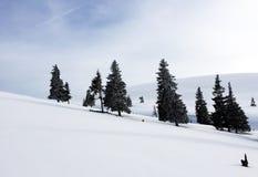 djupfryst trees Arkivfoton